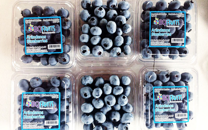 Mexican Blueberries