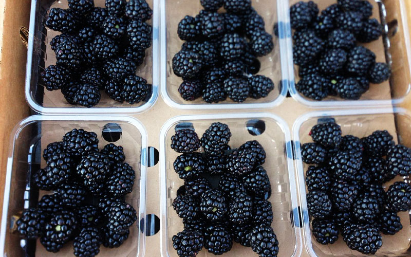Mexican Blackberries